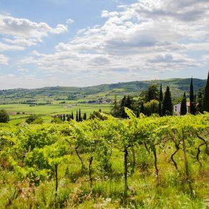 massimago vineyard in mezzane's valley