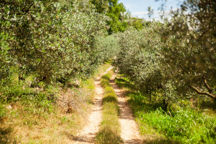 country roads in valpolicella