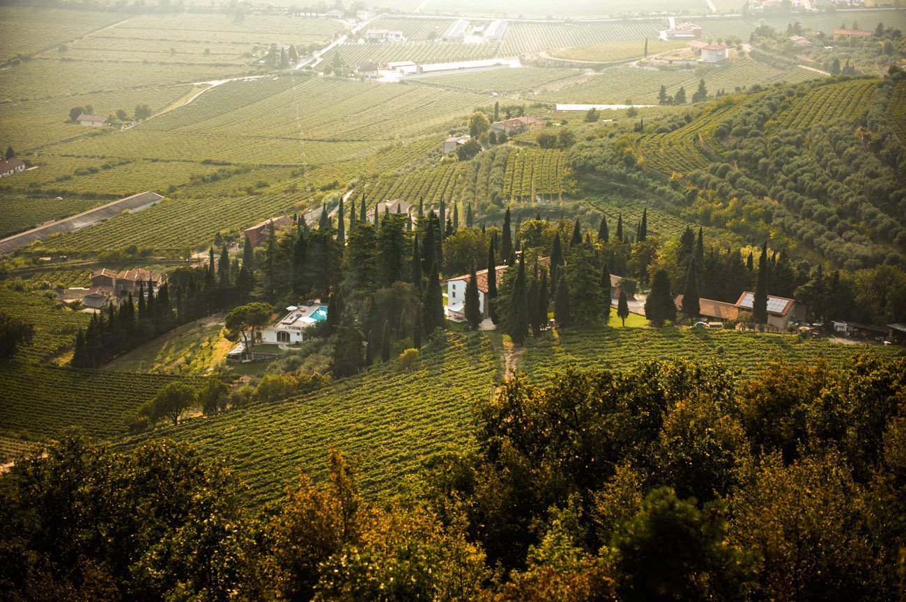 vineyards_page-8993