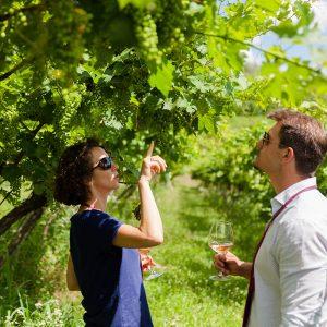 tasting massimago wine among the vineyards- massimago wine relais