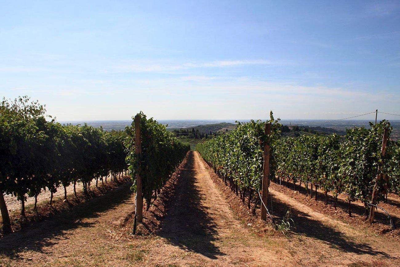wine_relais_gallery-3